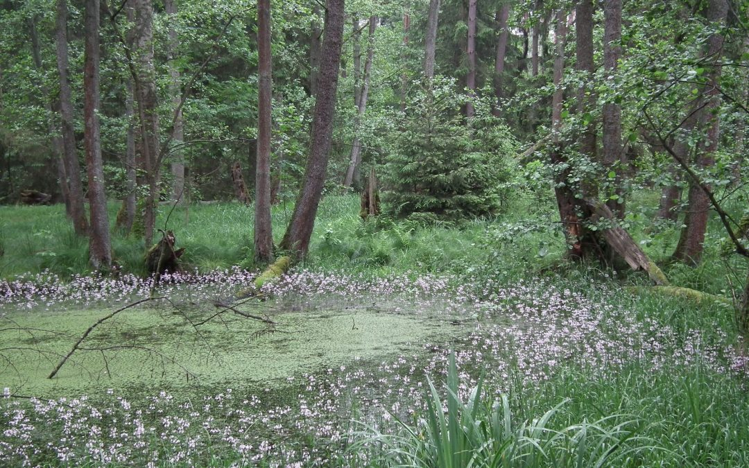 Vom Mittelalter zum Fußballplatz – (fast) immer am Fischbach entlang